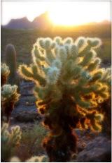 Tucson4